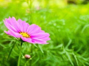 lilled tallinn